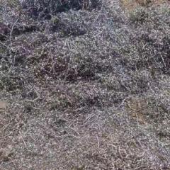 江阴基地 机械加工料 刨花散料